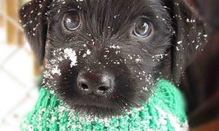 A Estos 16 Animales Les Encanta El Invierno