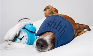 10 Motivos Para Dormir Después Del Almuerzo