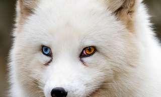 Los Más Bellos Ojos De Animales