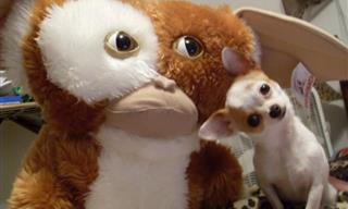 Divertidas Imágenes De Animales Que Te Harán Sonreir
