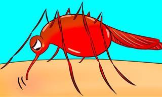 Si Los Mosquitos Te Pican Más Que a Otros, Aquí Tienes El Por Qué