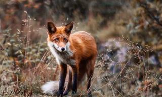 Increíbles y Coloridas Fotografías De Los Animales De Los Bosques En Finlandia