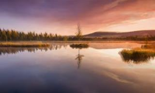 Viaje En 4K: Un Paseo Por El Bosque Mágico De Bohemia