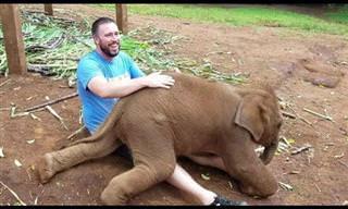 ¡Los Bebés De Elefante Más Dulces Que Verás Nunca!
