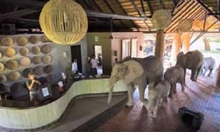 En Este Hotel Los Elefantes También Son Bienvenidos