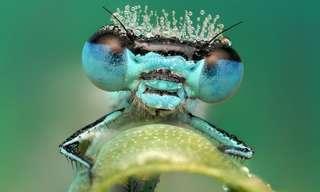 ¡El Mundo De Los Insectos En Macrofotografía!