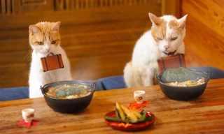 Dos Gatos De Vacaciones En Japón…