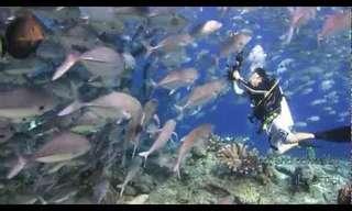 ¡Una Aventura Bajo El Agua En Sipadan!