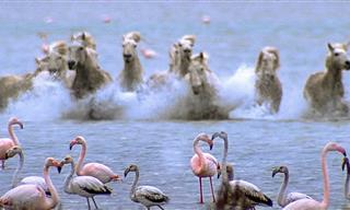 Belleza De La Naturaleza: Flamencos y Caballos Corriendo