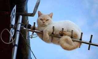 ¡Un Divertido Nuevo Día de Gatos!