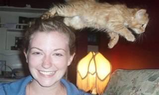 15 Gatos Dispuestos a Arruinar Una Buena Foto