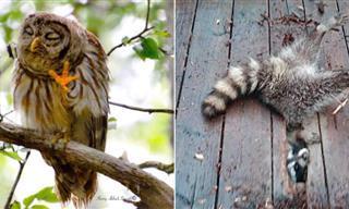 18 Animales Salvajes Captados En Momentos Graciosos