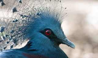 Las Más Hermosas Aves Del Mundo