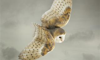 Mark Harvey Logra Fotografiar Las Aves En Pleno Vuelo