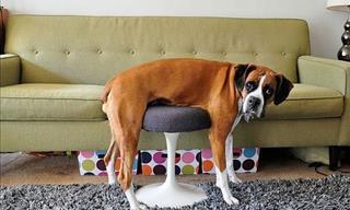 Imágenes Adorables: Las Mascotas vs. Los Muebles