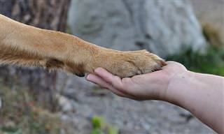 Guía: Cómo Comportarse Adecuadamente Con Los Perros