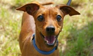 ¿Alguna Vez Has Visto Un Perro Que Sepa Hablar y Leer?