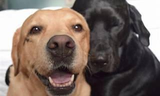 24 Razones Increíbles Para Tener Dos o Más Mascotas