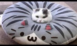 Desafío: ¡Intenta No Reírte De Estos Gatos Hilarantes!