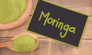 """¡Moringa! El Aceite Del """"Árbol Milagroso"""""""