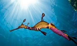¡El Lado Más Majestuoso Del Fondo Del Mar!