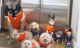 Steve Greig El Hombre Que Ha Dedicado Su Vida a Rescatar Mascotas Ancianas