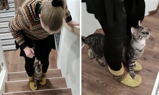 Los Gatos También Son Capaces De Aprender Muchas Cosas