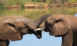 7 Datos Que Prueban La Gran Inteligencia De Los Animales
