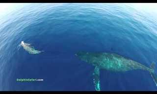 Volando Sobre Los Delfines