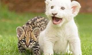 ¡El Adorable Día De Los Felinos!