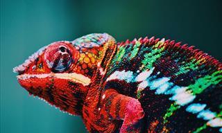 15 Interesantes y Sorprendentes Datos Sobre Los Colores