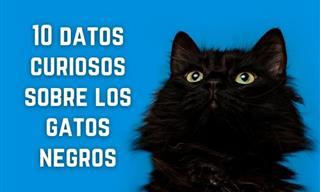 10 Datos Curiosos Sobre Los Gatos Negros Que Probablemente No Conocías