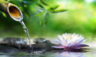 28 Frases Zen Para Afrontar La Vida De Forma Diferente