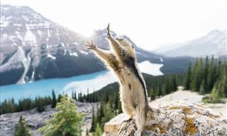 14 Fotografías del Concurso National Geographic 2015