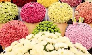 ¡Bellísimo Festival Floral de Chelsea!