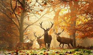 Hermosos Animales Que Adoran El Otoño