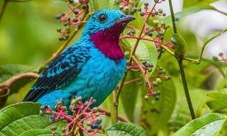 Las Más Radiantes y Bellas Especies De Aves