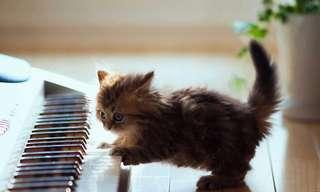 ¡Por Fin Otro Día De Gatos!