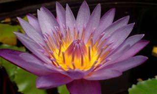 La Belleza De Las Flores y Las Palabras