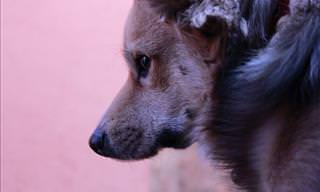 El Noble Espíritu De Los Perros
