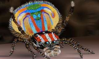 10 Asombrosos Animales Descubiertos en 2014