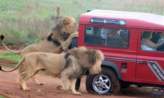 20 Hilarantes Fotos Que Solo Verás En África