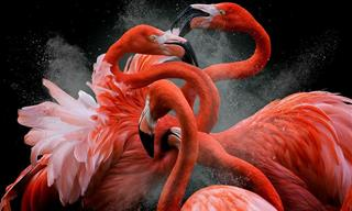 22 Increíbles Fotografías De Aves Del Concurso BPOTY