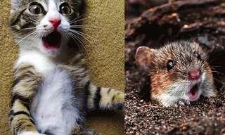 ¡Sorpréndete Junto Con Estos Adorables Animales!