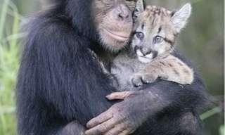 Amigos Serán Los Amigos…