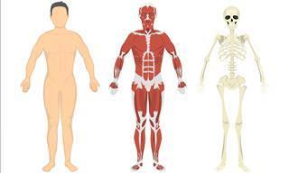 Test: Demuestra Todo Lo Que Sabes Sobre Anatomía