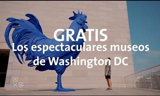 Pasea Con Nosotros Por La Ciudad De Washington En Los Estados Unidos