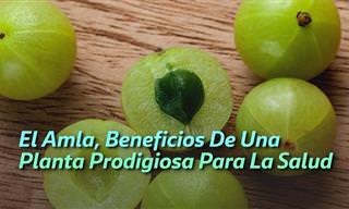 Amla: 10 Beneficios De Una Desconocida Fruta