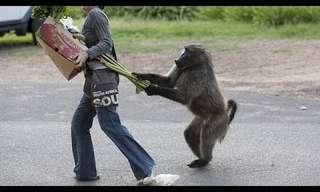 ¡Los Animales Más Molestos Pero Divertidos!
