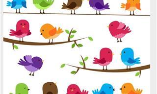 16 Aves Vistas En Todo Su Esplendor